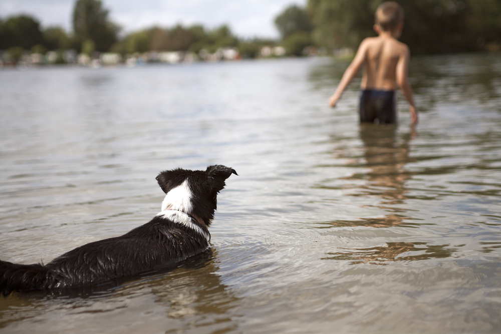 Young boy swimming at the lake while his dog watches and worries.